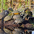 Al Powell Photography USA - Reptile Refuge
