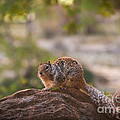 Robert Bales - Rock Squirrel in Zion