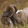 Roger Bryant - Rocky Mountain Rams