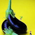 Paul Ge - Rolling on eggplants...
