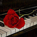 Larry Goss - Rose and Piano