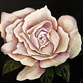 Anne Barberi - Rose Glow