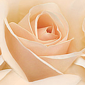 Jennie Marie Schell - Roses Three Peach Floral