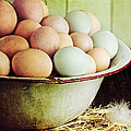 Stephanie Frey - Rustic Farm Raised Eggs