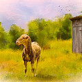Mary Timman - Rustic Pasture