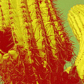 Carolina Liechtenstein - Saguaro Celebration I
