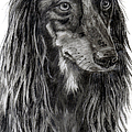 Michelle Wrighton - Saluki in Graphite