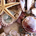 Colleen Kammerer - Sanibel Shells