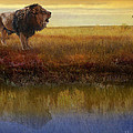 R christopher Vest - Savanna Reflection...