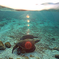 Paul Kennedy - Sea Turtles at Sunrise