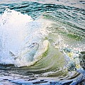 Barbara Chichester - Sea Turtles Wave Play