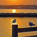 Karen Silvestri - Seaguls at Sunset