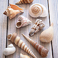 Jan Bickerton - Seashell Collection