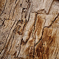 Angela A Stanton - Sedona Wood Bark with...