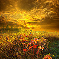 Phil Koch - Shine Your Light for the...