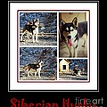 Barbara Griffin - Siberian Husky Collage