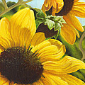 Adam Johnson - Silver Leaf Sunflowers