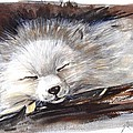Katerina Kovatcheva - Sleepy white fox