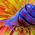 Leslie Crotty - Snail Pondering On A...