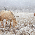 Theresa Tahara - Snow Falling On Horses
