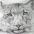 Alan Pickersgill - Snow Leopard