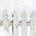 Marianne Campolongo - Snow on a white picket...