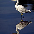 Saija  Lehtonen - Snowy Egret Reflection