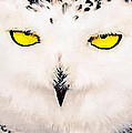 Bob and Nadine Johnston - Snowy Owl