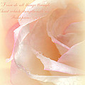 Sweet Moments Photography                  - Soft Rose