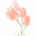 Jennie Marie Schell - Softness of Peach Tulip...