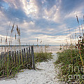 Dawna  Moore Photography - South End Sojourn Amelia...