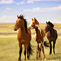 Jerry Cowart - Southwest Wild Horses On...
