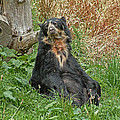 Tessa Fairey - Spectacled Bear