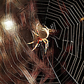 EricaMaxine  Price - SPIDER - Building a...