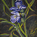Karen Rispin - Spiderwort on forest...