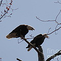 Daniel Henning - Spring Bald Eagles 2013...
