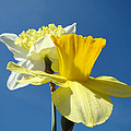 Baslee Troutman Floral Art Prints - Spring Blue Sky Yellow...