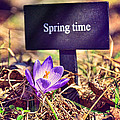 Gynt - Spring time