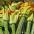 Jean Hall - Squash Blossoms