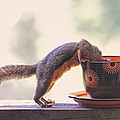 Peggy Collins - Squirrel and Coffee