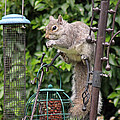 Tony Murtagh - Squirrel eating nuts