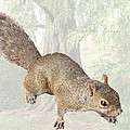 Terry Weaver - Squirrel in Forest
