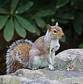 Cynthia Guinn - Squirrel Showing Respect