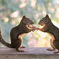 Peggy Collins - Squirrels That Share