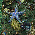 Linda Troski - Starfish and Fish Xmas...