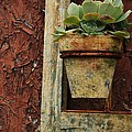 Karl Anderson - Succulent in Frame