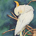 Christelle Grey - Sulphur Crested Cockatoo