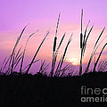 Al Powell Photography USA - Sultry Sunset