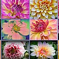 Dora Sofia Caputo - Summer Time Dahlias