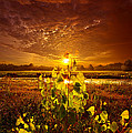 Phil Koch - Summer Dreams Drifting...